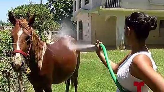 incómodo caballo tv en vivo