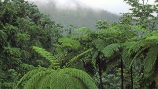 930_13_UPR-0019_tree-ferns-forest.jpg