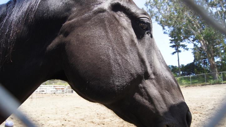 horse-generic-edit