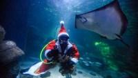 """""""Santa Claus buzo"""" alimenta a mantarrayas y tiburones"""