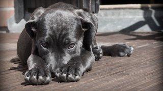 tlmd_entrenamiento_perros_15