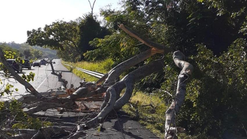 foto árbol caído