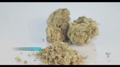 Los beneficios del cannabis medicinal en las personas de la tercera edad