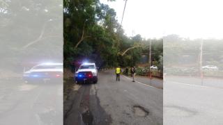 Un árbol se cayó en la carretera PR-1 de Caguas.