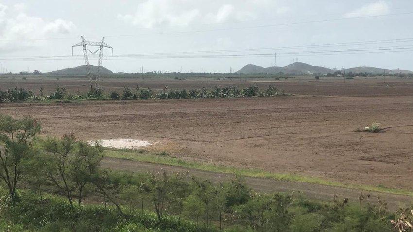 Agricultura en Puerto Rico