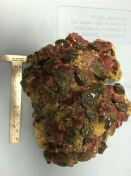 corales_ilegales_arecibo_5