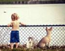 tlmd_entrenamiento_perros_02