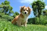 tlmd_entrenamiento_perros_03