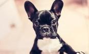 tlmd_entrenamiento_perros_01
