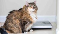 Un veterinario brinda algunos consejos para evitar que sus perros y gatos no tengan obesidad y de otros padecimientos.