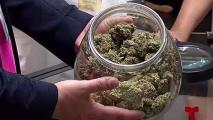 Doctores se familiarizan con el uso del cannabis
