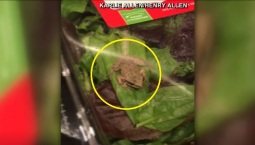 En la ensalada: intrépida rana viva asusta a familia
