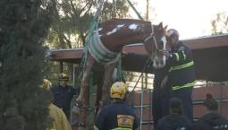En video: rescatan a caballo que cayó dentro de contenedor de basura