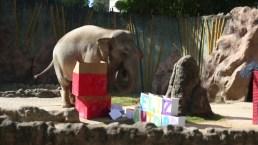 Animales reciben regalos de Navidad en Guatemala