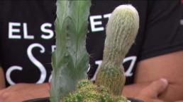 Conoce los beneficios energéticos del cactus