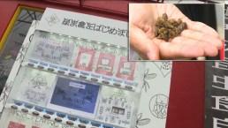 Insólito: la máquina expendedora de gusanos y tarántulas existe y ya funciona
