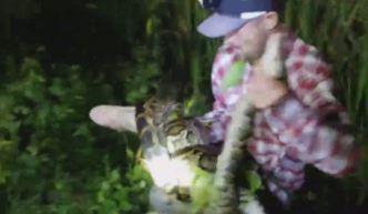 Impresionante: salvan a caimán de ser devorado por pitón