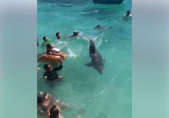 ¿Qué hacer si te encuentras un delfín en la playa?