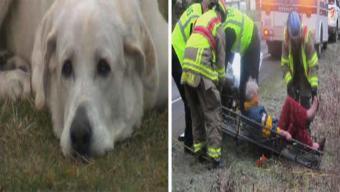 Bomberos rescatan a perro de arroyo helado