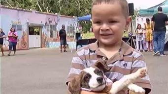 Más de 1,417 mascotas cuentan con un nuevo hogar