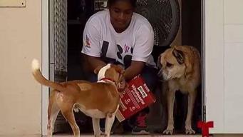 Alarmante la cantidad de mascotas entregadas a albergue