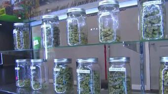 Cientos buscan licencia de cannabis medicinal en el 4/20