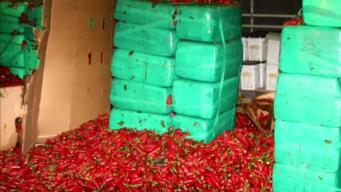 Toneladas de chiles jalapeños ocultaban insólita carga