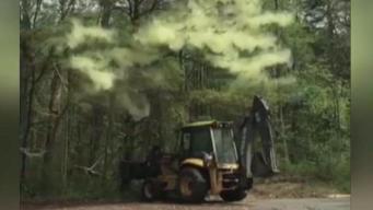 La pesadilla de los alérgicos: bomba de polen