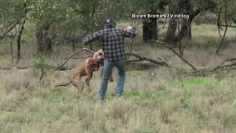 Increíble incidente entre canguro y perro acaba así