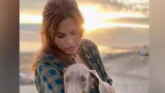 """Eva Mendes presenta a su """"hijo"""" canino adoptado en refugio"""