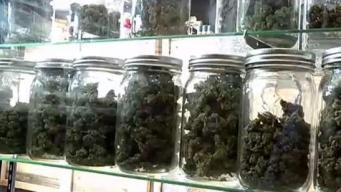 Licencias de cannabis serán otorgadas por internet