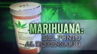 Marihuana: Del punto al dispensario 1