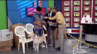 Piru encontró el perrito perdido
