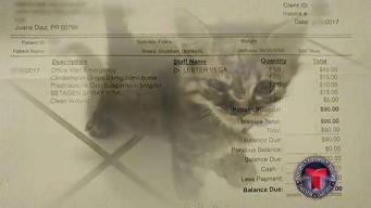 Se hacen pasar por veterinarios licenciados