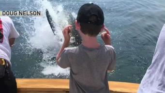 """¡Susto! Tiburón emerge frente a familia y les """"roba"""""""