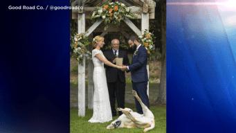 Viral: justo en sus votos de boda su perro hace lo impensable