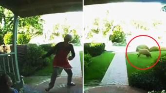 Abuela entra en pánico cuando aparece oso en su patio