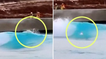 En video: cisne surfea las olas como todo un campeón