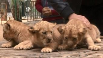 Zoo pone a la venta sus animales por dinero en efectivo