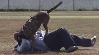 Feroces: cómo entrenan a los perros del Servicio Secreto