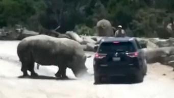 En video: rinoceronte ataca vehículo de familia en México