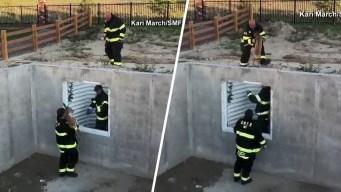 En video: rescatan a cervatillo atascado en un sótano