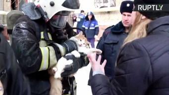 "Bombero ""resucita"" a gato tras rescatarlo de incendio"