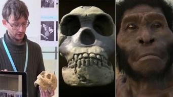 Hallazgo podría cambiar lo que se sabe de evolución