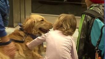 """Perros """"terapéuticos"""" para viajeros estresados en EEUU"""