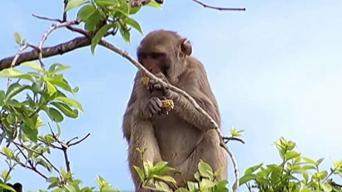 Declaran como reserva científica la Isla de los Monos