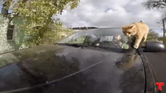 El taxista viral gracias a su intrépido gato