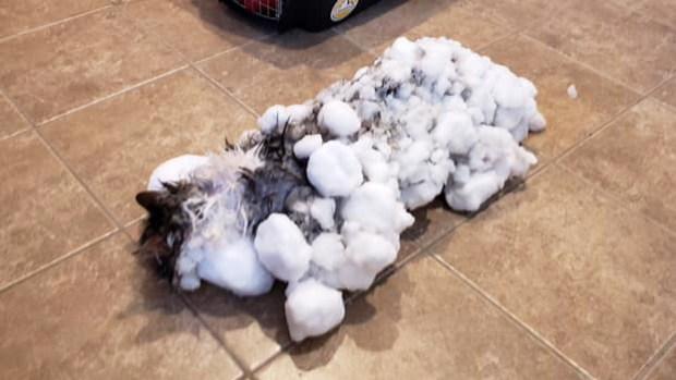 [TLMD - LV] Reviven a gato completamente congelado