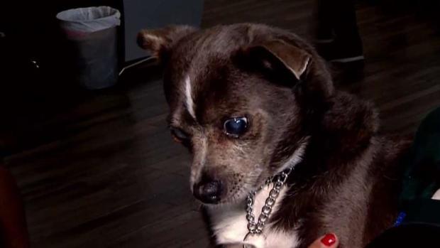 [TLMD - PR] Adoptan mascotas con necesidades especiales en albergue de Humacao