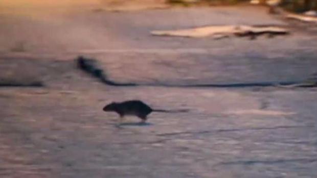 [TLMD - NY] Bacterias desconocidas en heces de ratones